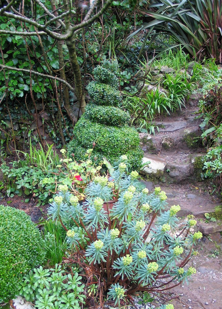 Topiary forms a backbone to the winter garden