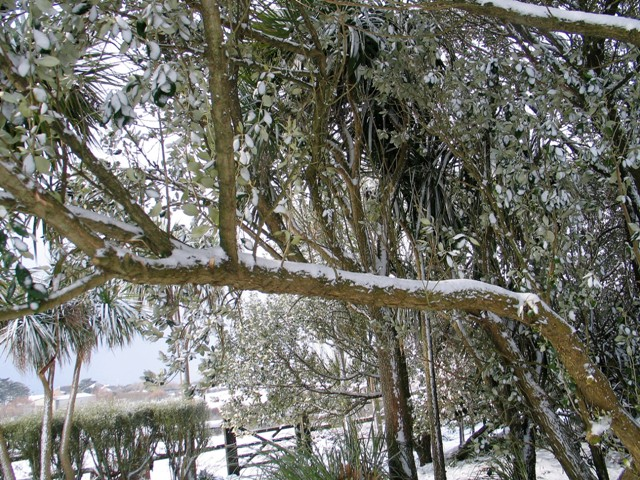 powdery snow on bare branches