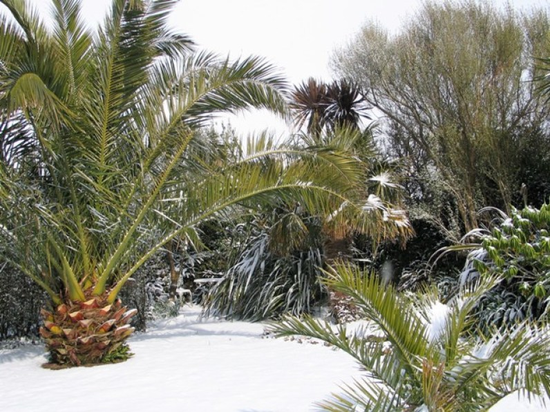 Palms in the centre of the Italian Garden