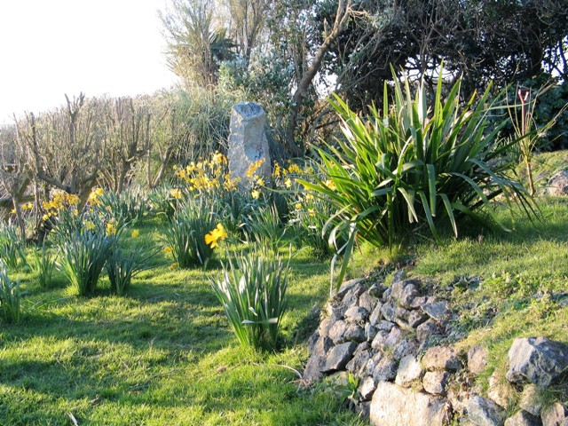 golden days of spring amidst the Daffodils after the recent snow