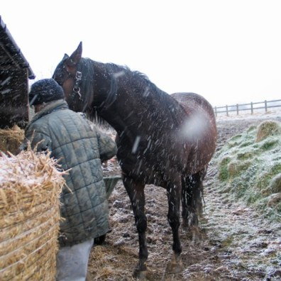 horse being led in from the snow to her stable