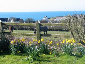 Easter view from Ednovean Farm - horses blue seas and daffodils