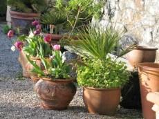 Soft golden sunlight on terracotta pots