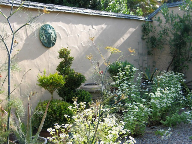 cottage courtyard style topiary and feverfew