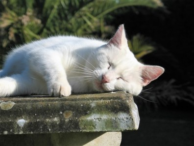 White cat enjoying a garden bench