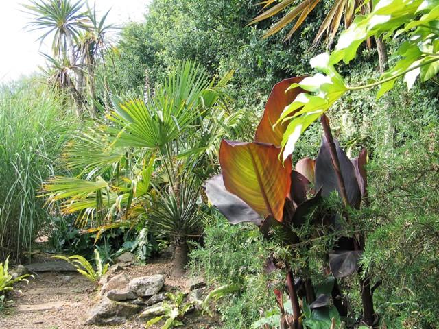 Sub tropical gravel border - june's solstice in the garden