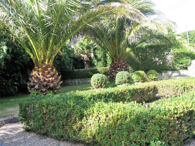 - courtyard Ednovean Farm - Formal box and Date palms