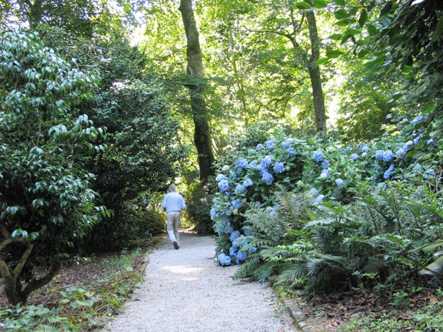 Blue hydrangeas under a canopy of trees