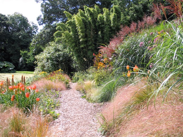 Late summer planting - grasses Cannas - Lake Sue