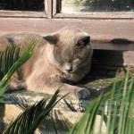contented cat on sunny window ledge