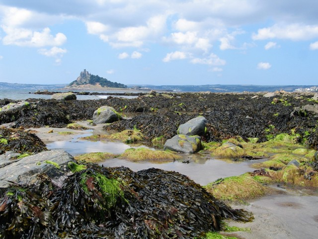 Very low tide exposing the underwater sea weeds