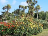 Hot summer colours in the garden