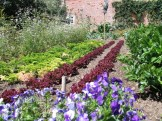 Vibrant planting of vegetables in orderly rows