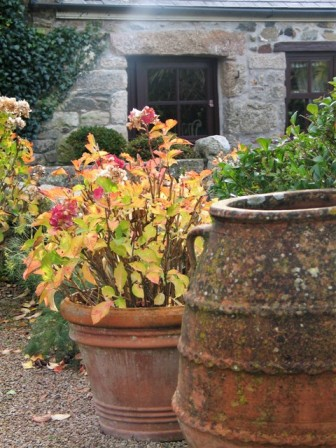 Greek pots and fading leaves - Ednovean Terrace