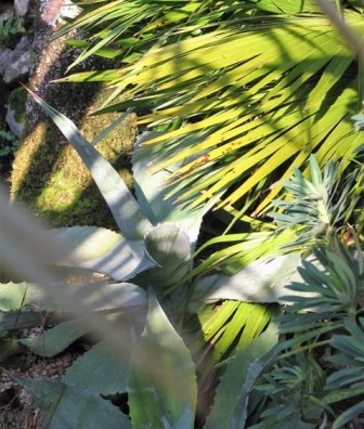 Agave and palm leaves