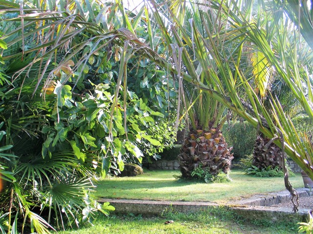 Lawns, Dat Palms, figs flank the courtyard - Ednovean farm