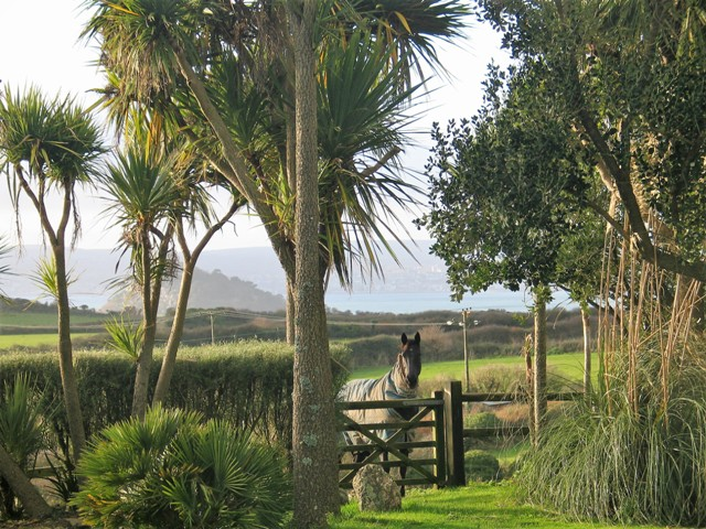 Palms and an Olearia Hedge now shelter the garden