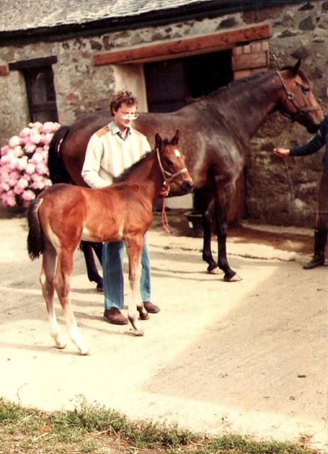 Mare and foal in a farmyard