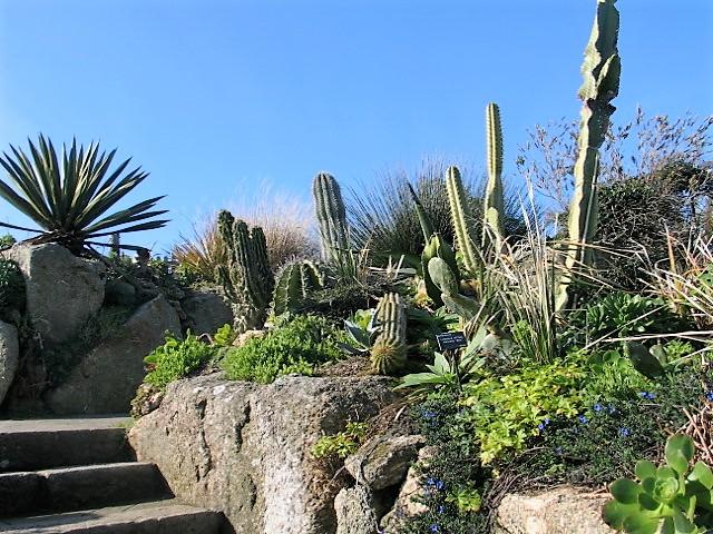 Garden detail - sub tropical
