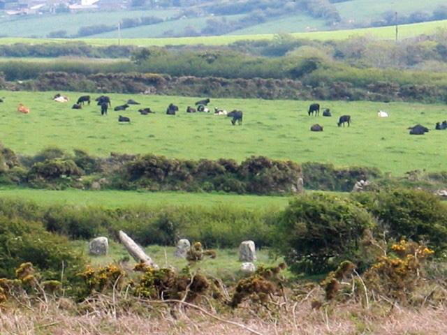 Stoen circle viewed fro heathland