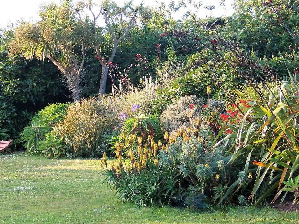 The hot border colours of early summer - July garden diary fo Ednovean Farm