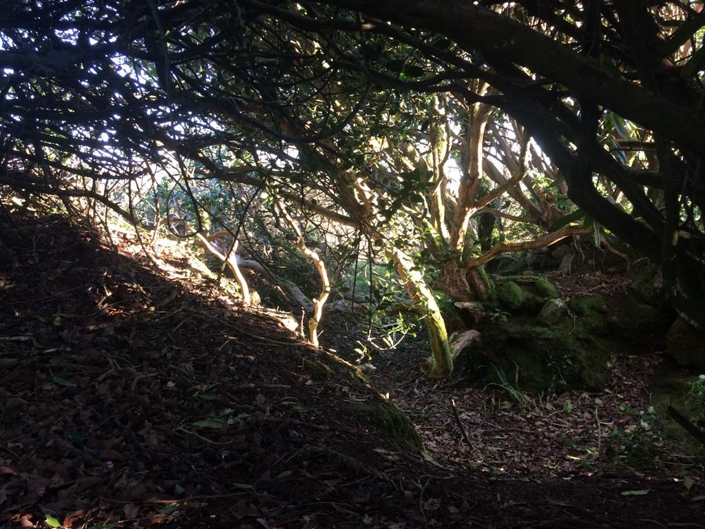 woodland glade