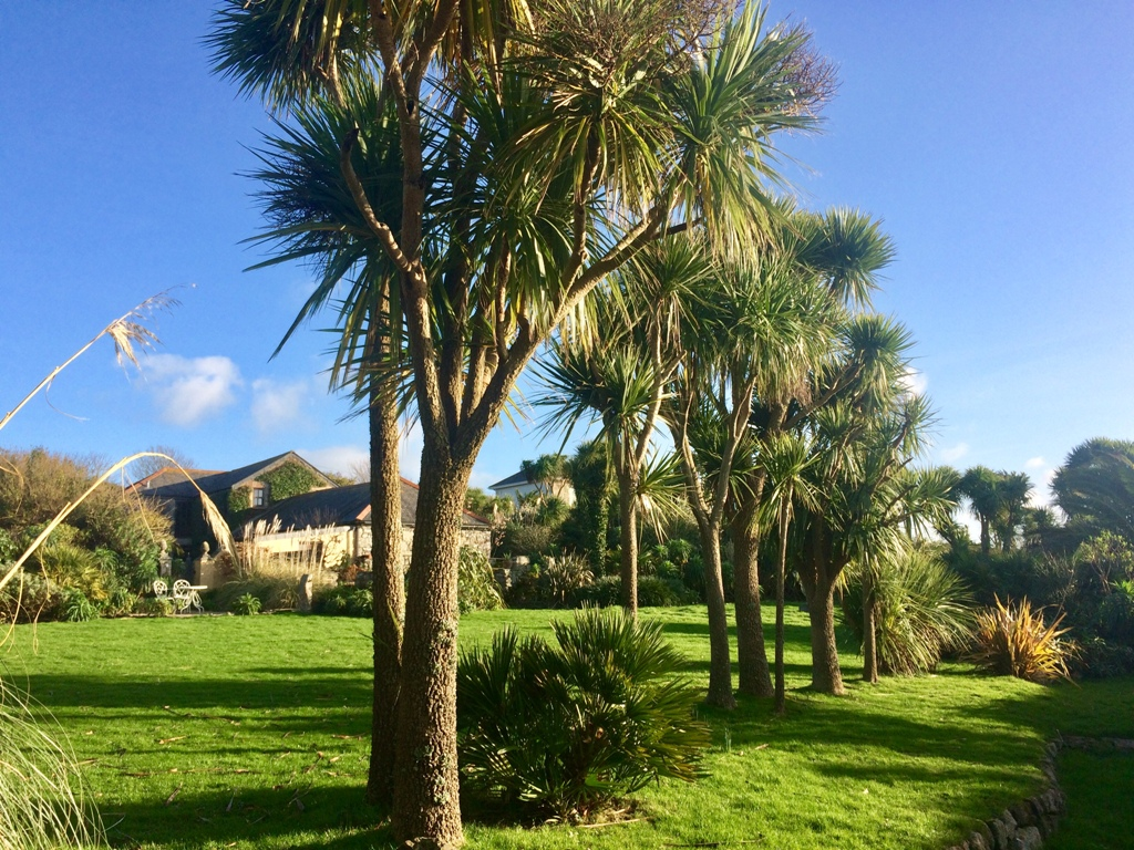 An avenue of Cordylines help to slow the winds from the sea