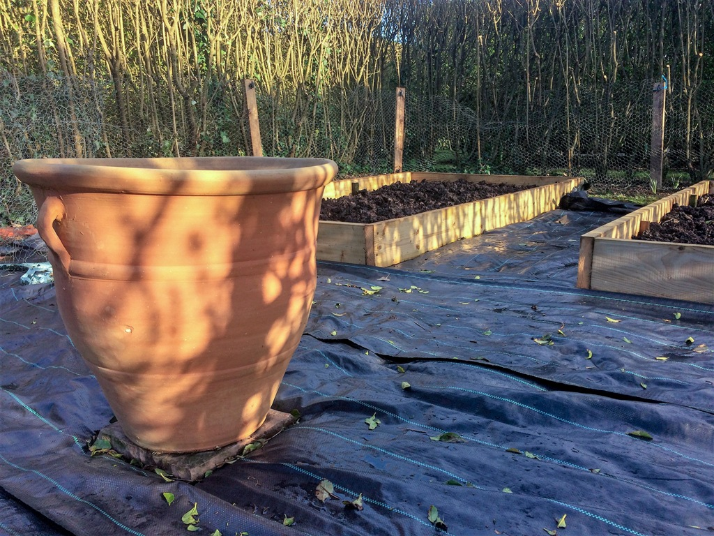 ornamental pot for potager centrepeice