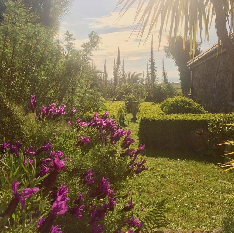 Echiums give the gardens at Ednovean Farm a Mediterranean vibe