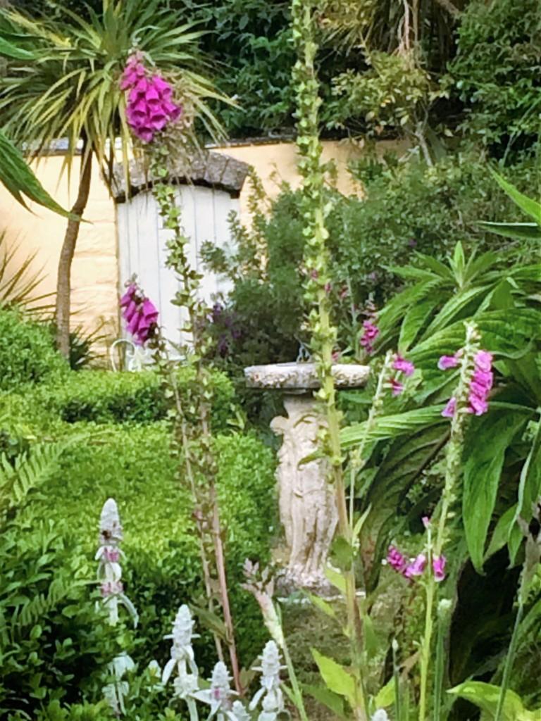 Atmospheric cottage garden topiary