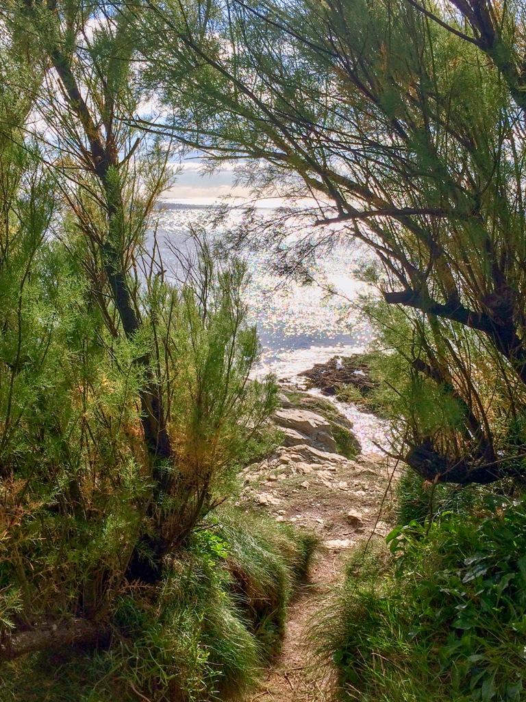 A wonderful coastal footpath near Prussia Cove to Piskies Cove
