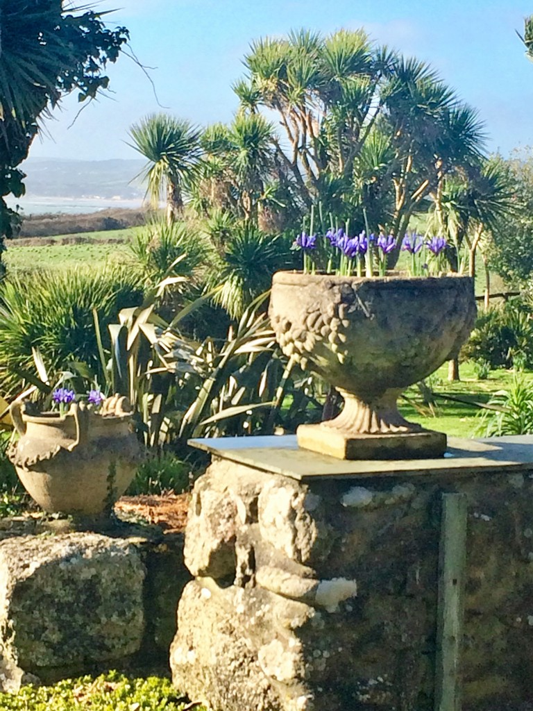 January February garden diary with the first spring bulbs