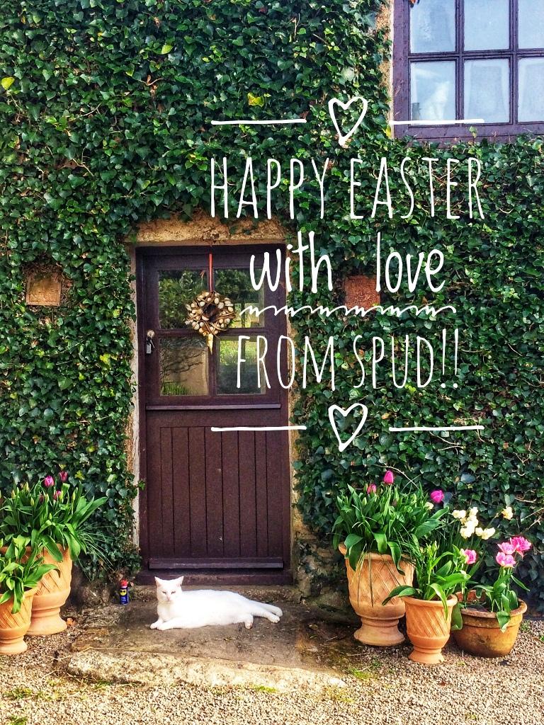 Happy Easter - cat lounging in welcoming doorway