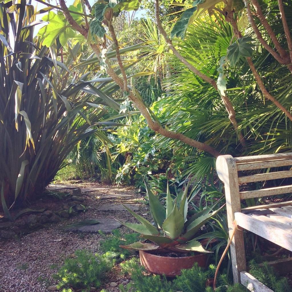 Garden path with sub tropical planting - garden diary Ednovean Farm
