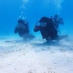 竹富島にて体験ダイビング、明るい砂底ではキュウセンたちがお出迎え。