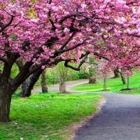 Kwiatowe perfumy na wiosnę. Moje TOP 5.