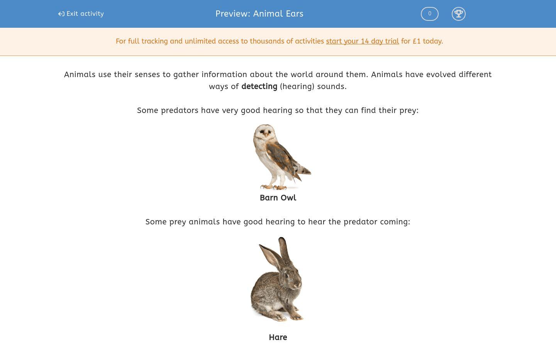 Animal Ears Worksheet