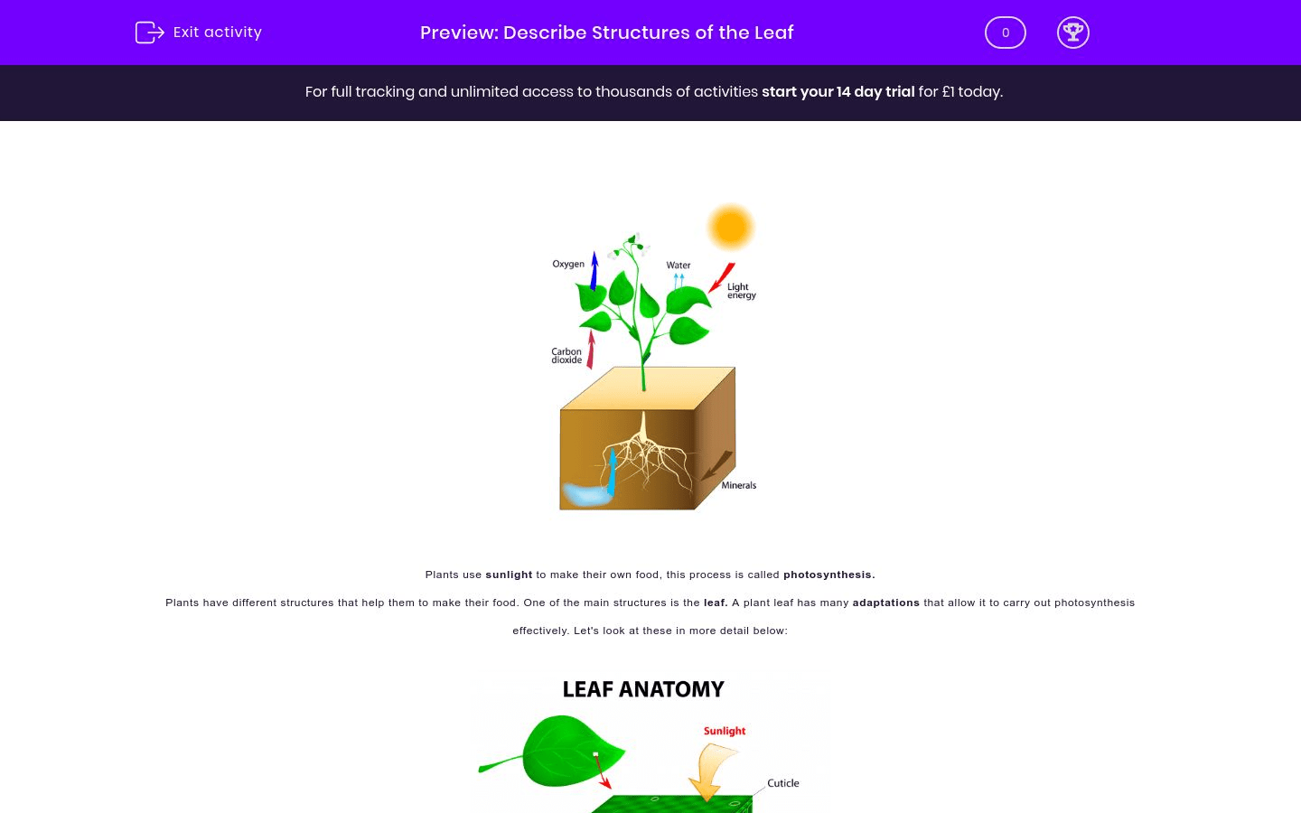 Describe The Structures And Functions Of The Leaf