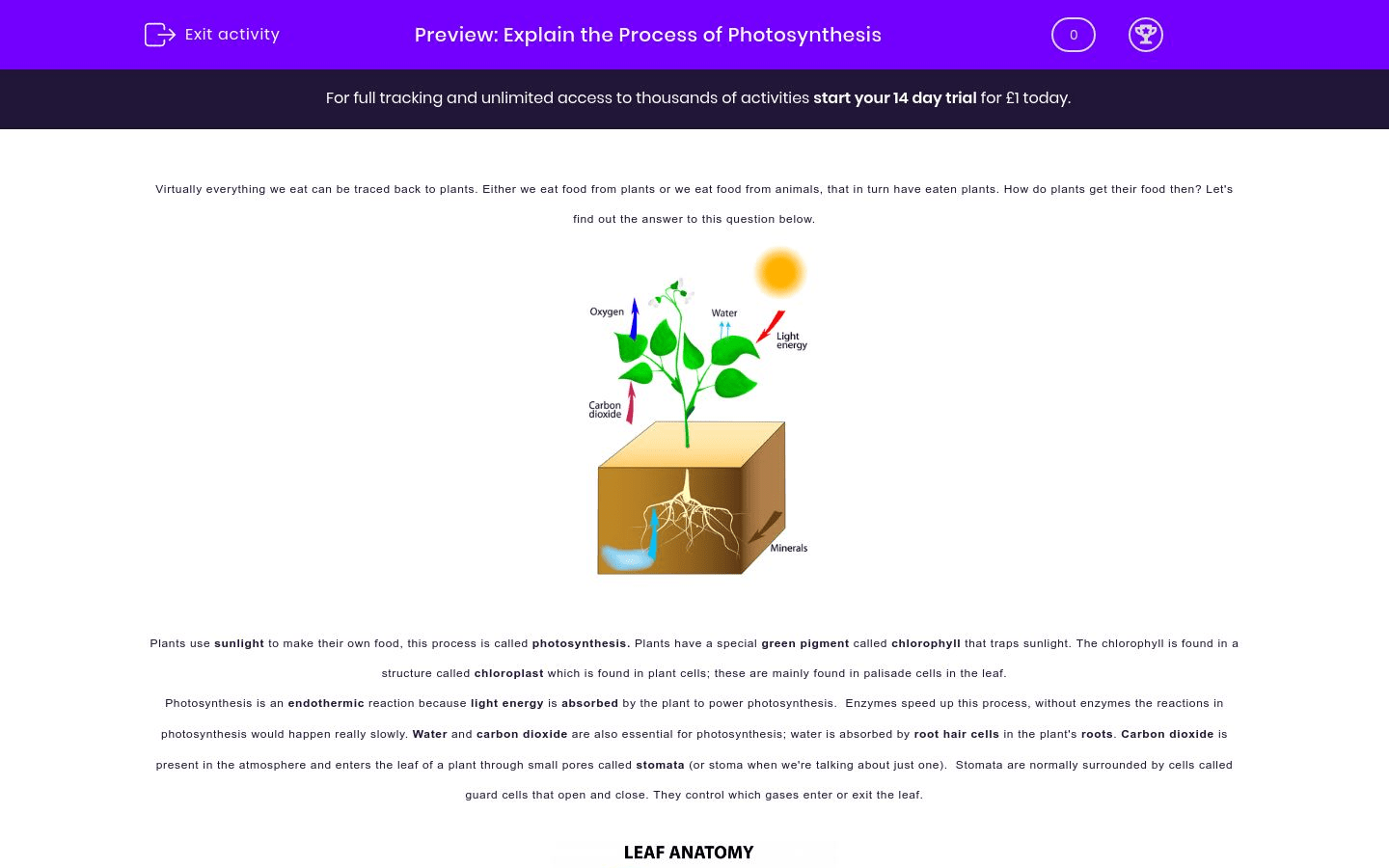 Explain The Process Of Photosynthesis Worksheet