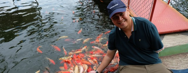 Me feeding Koi fishes