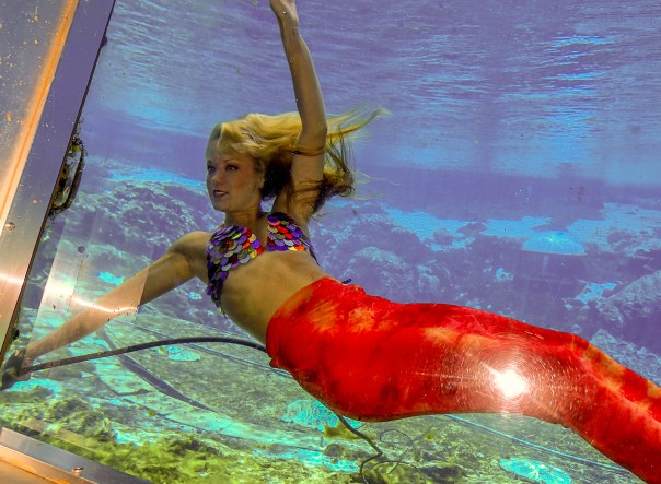 the Weeki Wachee live Mermaid show