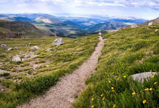 Down through the mountain flowers - Mt. Evans, Colorado