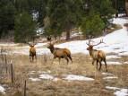 Three Elk - Colorado