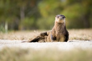You otter not interupt me
