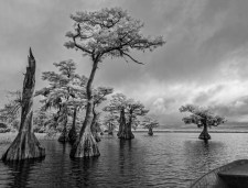 Blue Cypress Boat Ride
