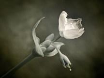 Flower in IR