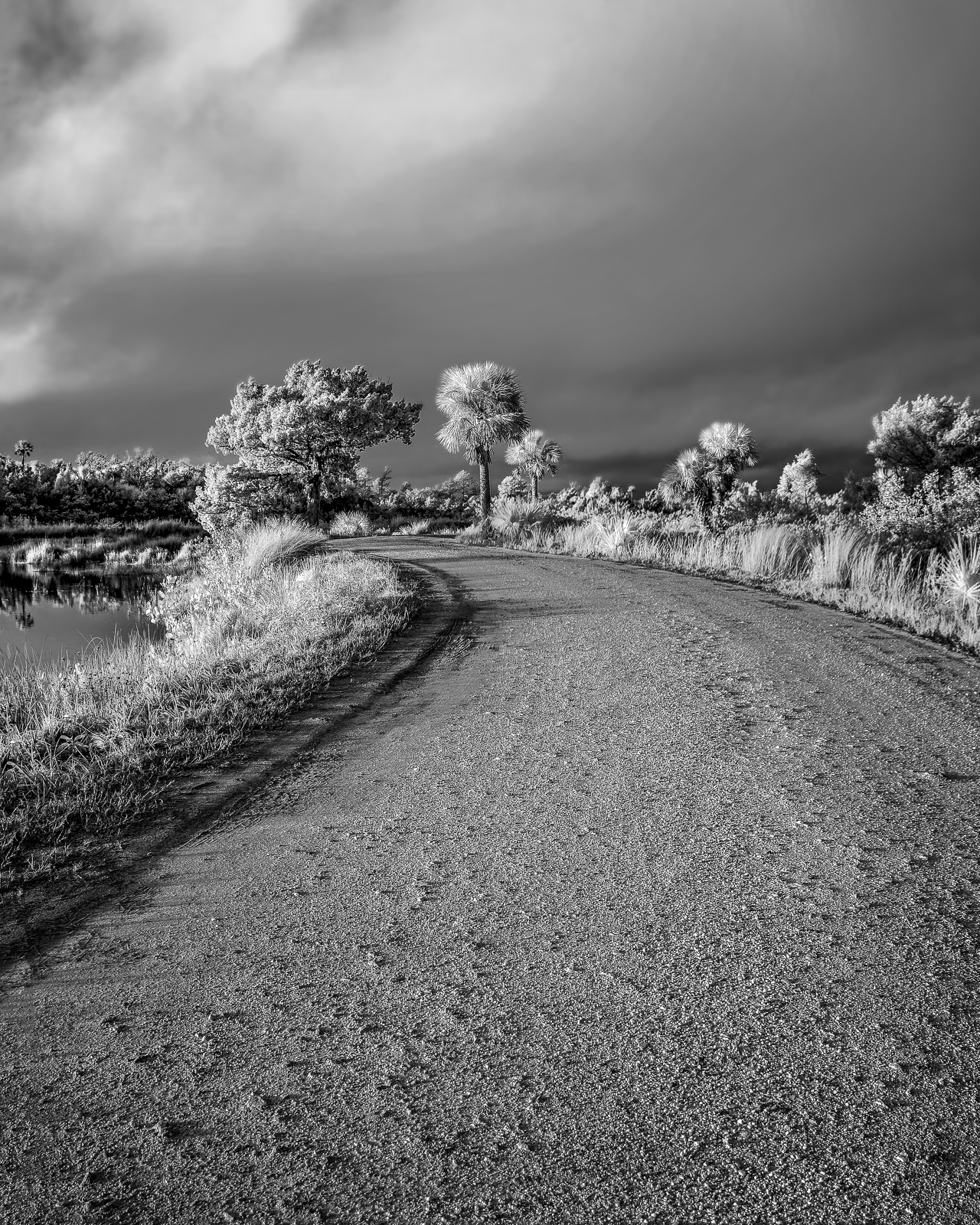 Morning Road in IR: Black Point Wildlife Drive