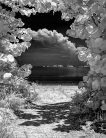 Path through the sea grapes