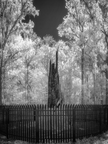 The Senator remains: Big Tree Park, Longwood, Fl