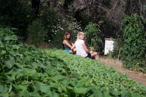 garden at camp 2011